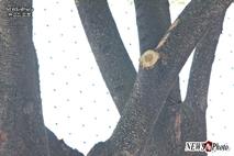 "[NEWSinPhoto]한기총 ""문재인 하야하라""릴레이단식텐트 폭염 가려주던 나뭇가지가 그렇게 미웠나?.....구청? 청와대?.20190712"